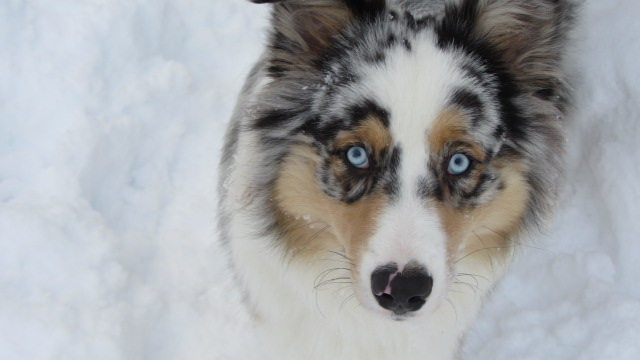 His bright blue eyes make this picture perfect!